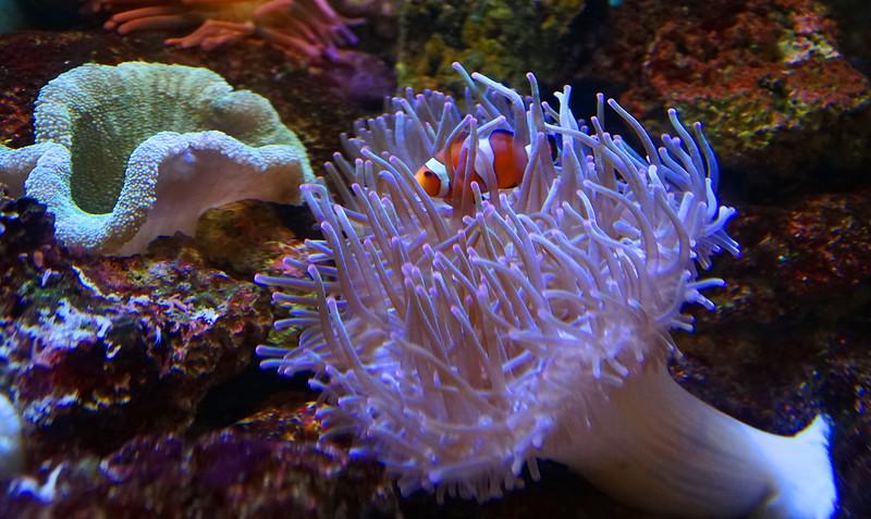 Aquarium Atlanta.  Nemo.  Found.