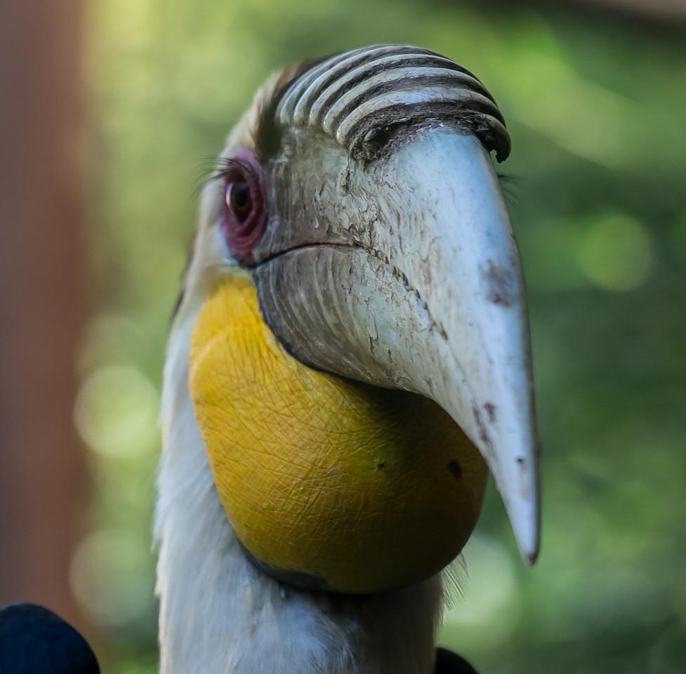 Zoo Atlanta.  Yellow Throated Something-Or-Other.
