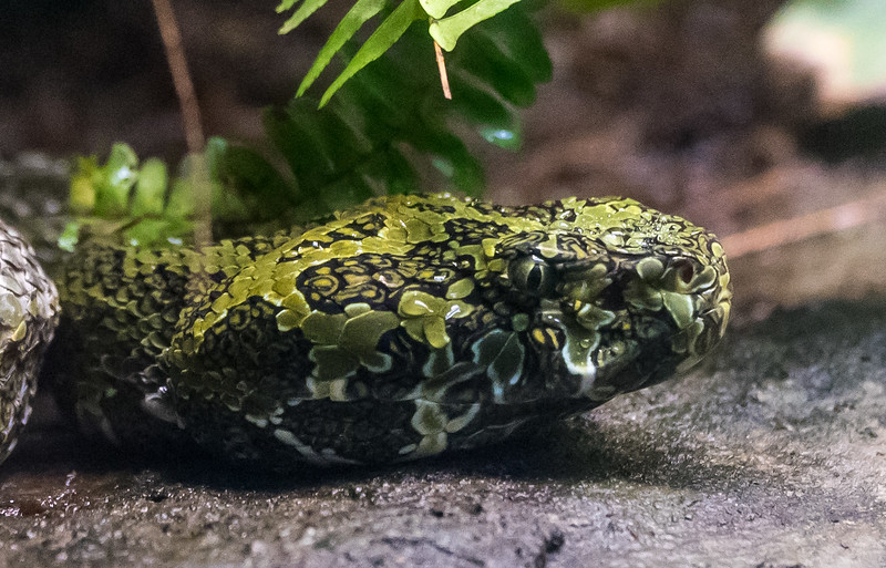 Zoo Atlanta.  Snake Eye.
