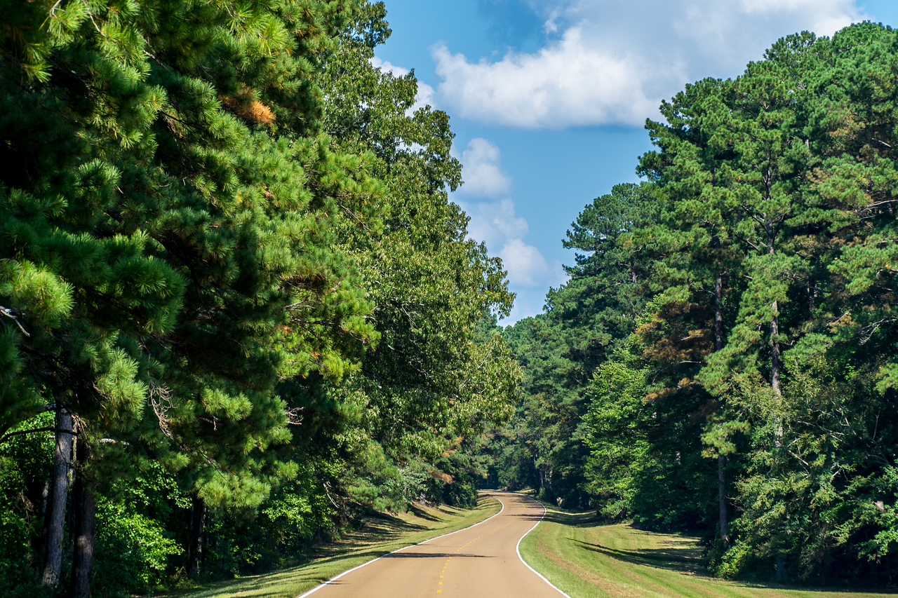 Natchez Trace Parkway, MS -- 9/21, 3:02 pm NTP has a long history, going back to the early 1700's.