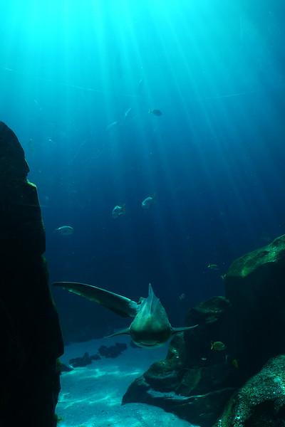 Aquarium Atlanta.  Sunlight in the Blue.