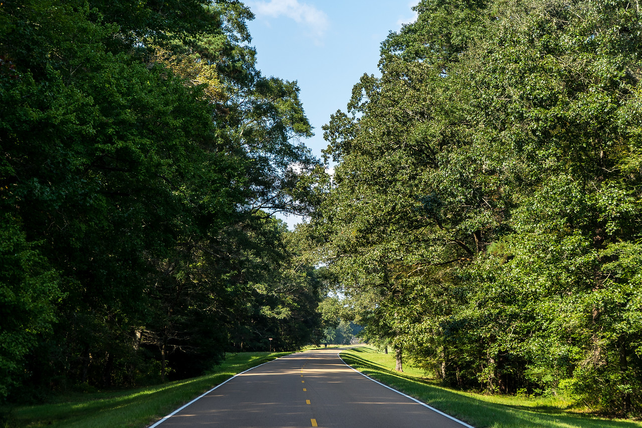 Natchez Trace Parkway, MS -- 9/21, 3:28 pm It was just a crude trail, but an established route through unremarkable wilderness.