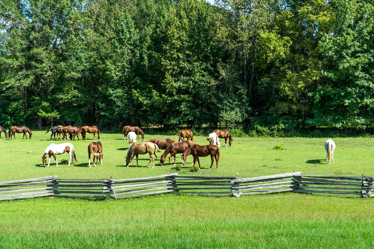 Natchez Trace Parkway, MS, MM 180 -- 9/21, 2:44 pm French Camp.  Horses.  Really.  Horses.