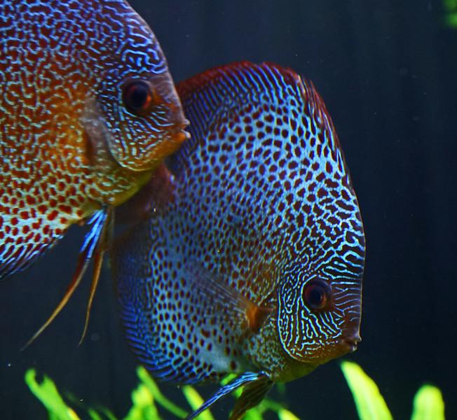 Aquarium Atlanta.  More Pretty Fish.