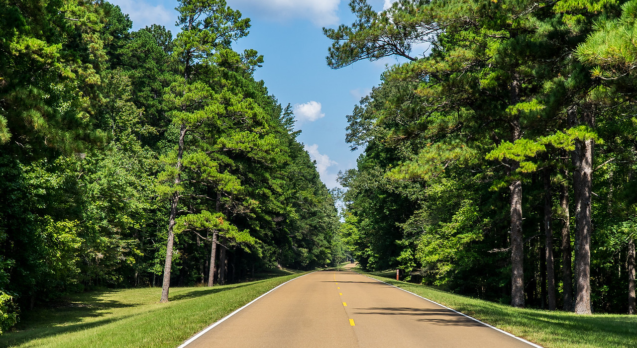 Natchez Trace Parkway, MS -- 9/21, 1:49 pm ... just tall healthy trees, well-kept lush green grass...