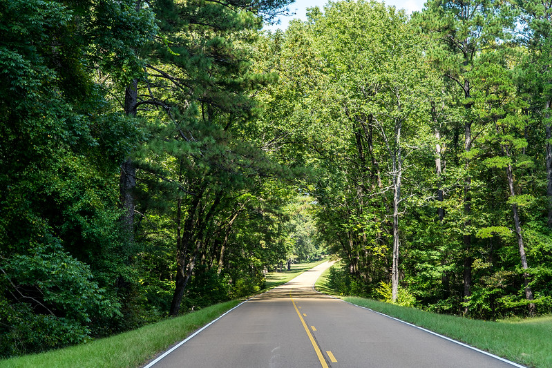 Natchez Trace Parkway, MS -- 9/21, 2:05 pm ... hours of smooooooth pavement, and almost NO traffic.  Have you seen a car in any photo yet?  Dun tink so.