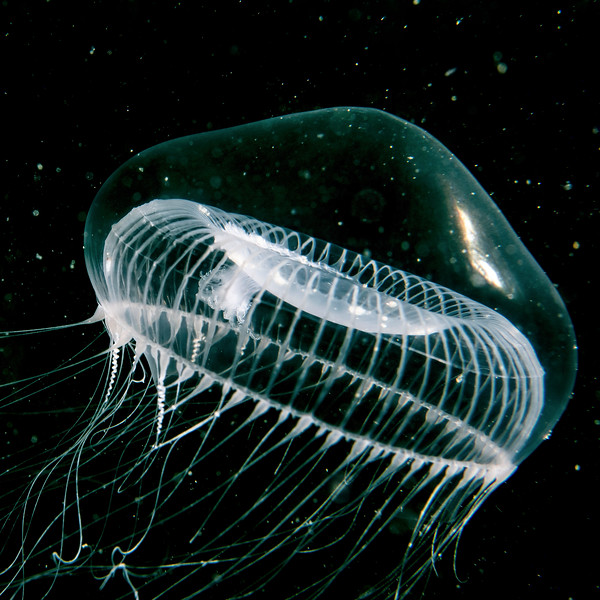 The Water Jelly