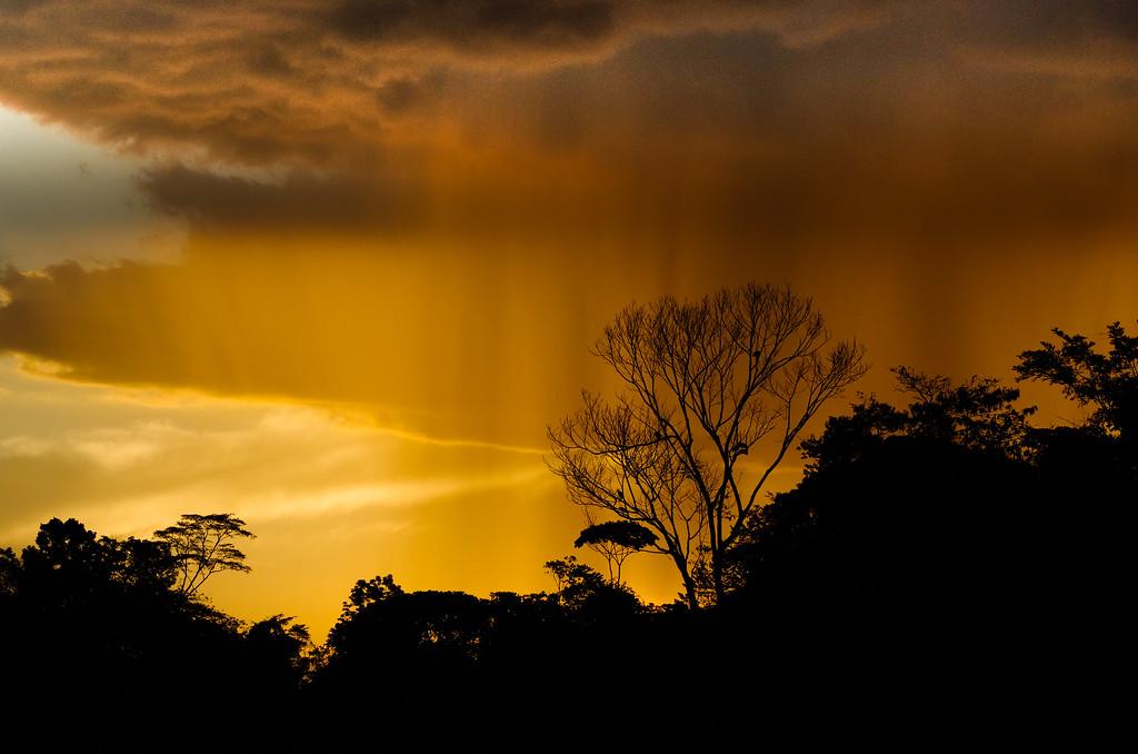 Amazon Rain Column