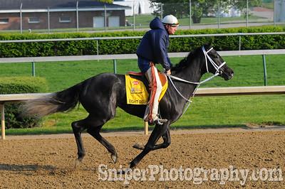 Eight Belles - Kentucky Derby Horse Backside - Churchill Downs