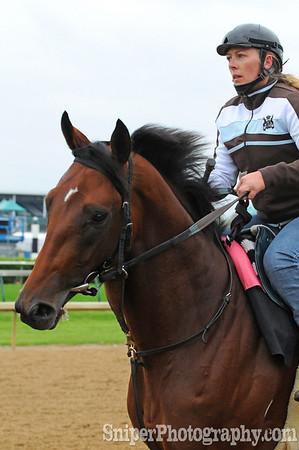 Big Brown - Kentucky Derby Horse Backside - Churchill Downs