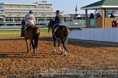 Chocolate Candy Takes the track for morning workouts at Churchill Downs.