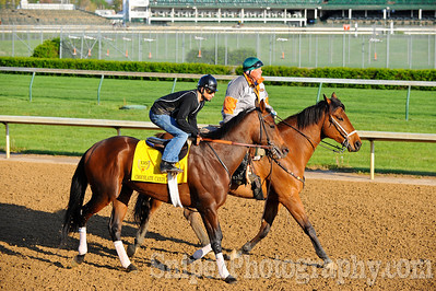 Kentucky Derby horse Chocolate Candy working out on the backside of Churchill Downs.