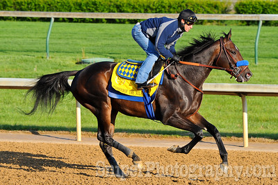 Kentucky Derby horse Pioneerof The Nile working out on the backside of Churchill Downs.