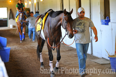 Kentucky Derby horse Chocolate Candy - Churchill Downs - Trained by Jerry Hollendorfer