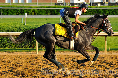 Kentucky Derby Horse General Quarters - Churchill Downs - Trained by Thomas McCarthy