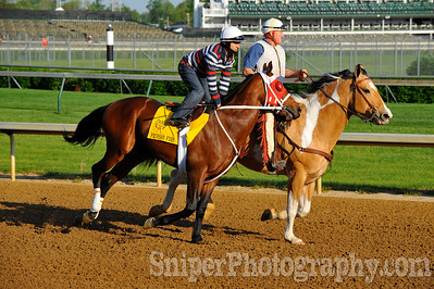 Kentucky Derby horse Friesan Fire - Churchill Downs - Trained by Larry Jones
