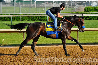 Kentucky Derby horse Pioneerof The Nile - Churchill Downs - Trained by Bob Baffert