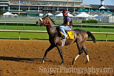 Kentucky Derby horse Win Willy - Churchill Downs - Trained by McLean ÒMacÓ Robertson