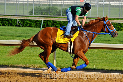 Kentucky Derby horse Summer Bird - Churchill Downs - Trained by Tim Ice