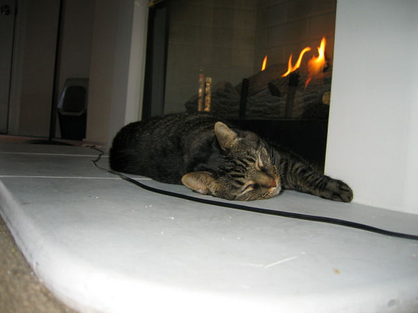 Grendel sleeping in front of the fireplace (115_1591)