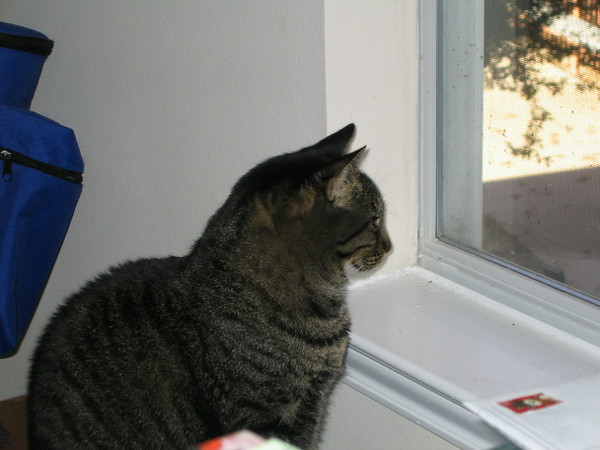 Grendel sitting and looking out the window (118_1862)