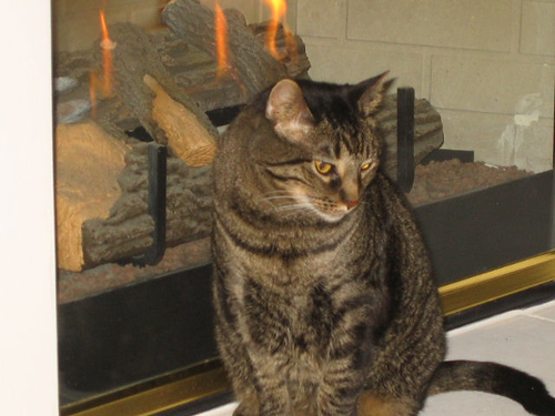 Grendel sitting in front of the faux fireplace (119_1958)