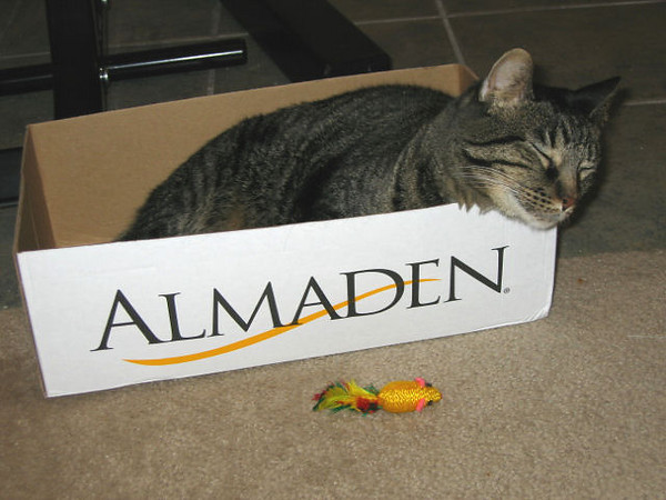 Grendel sleeping in a box (124_2408)