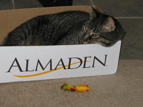 Grendel lying in a box (124_2414)