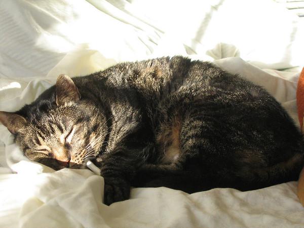 Grendel resting (141_4167)