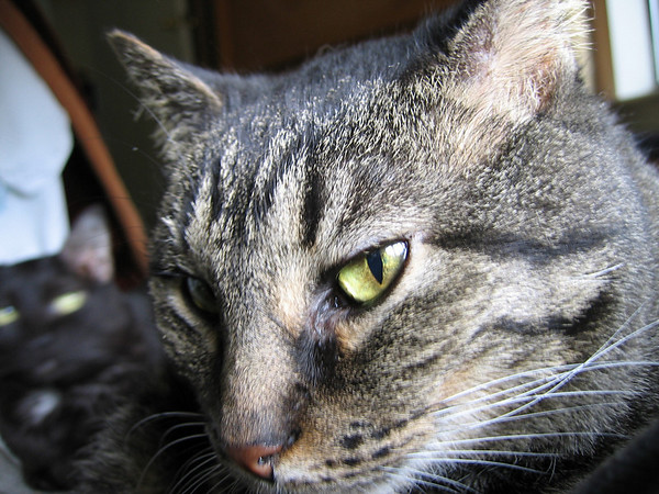 A close-up of Grendel in soft natural light with Kako blurred in the background
