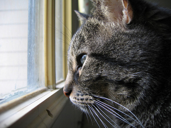 A close-up of Grendel as he looks out the window (189_8985)