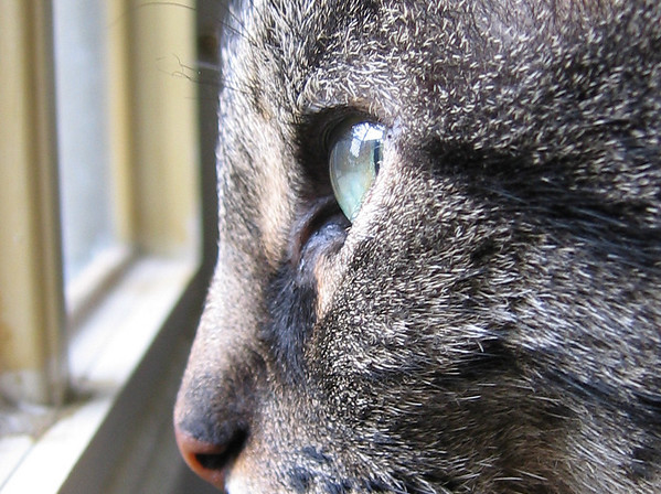 A close-up of Grendel as he looks out the window (189_8986)