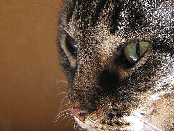 A close-up of Grendel (205_0535)