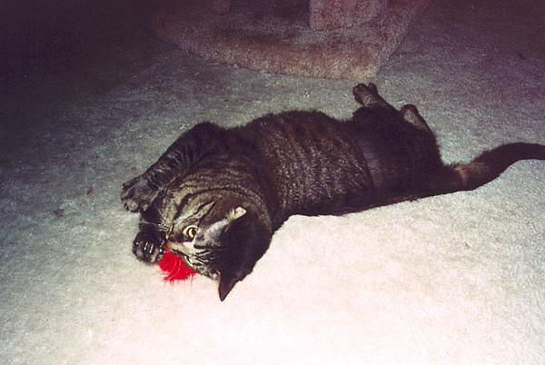 Grendel rolling around with the feather (grendel05)