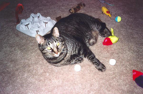 Grendel lying on the floor surrounded by several toys (grendel17)