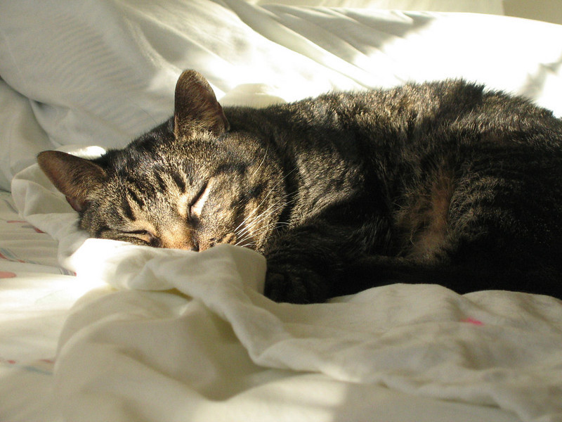 "<a href=""http://xenogere.com/cats-and-beds/"" title=""Cats and beds"">Blog entry</a>"