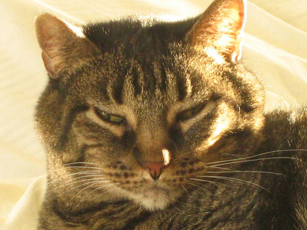 "<a href=""http://xenogere.com/good-morning-sunshine/"" title=""Good morning, sunshine"">Blog entry</a>"
