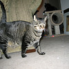 "<a href=""http://xenogere.com/this-is-the-kitty-i-want-back/"" title=""This is the kitty I want back"">Blog entry</a>"