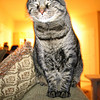 "<a href=""http://xenogere.com/happy-kitty/"" title=""Happy kitty"">Blog entry</a>"