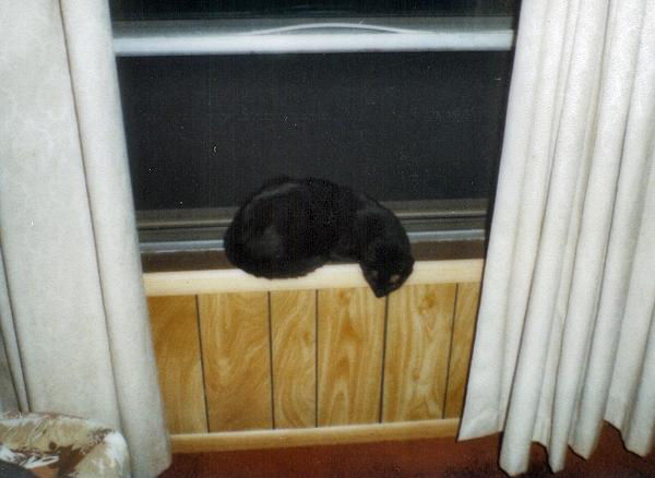 Henry sleeping in my old window (henry05)