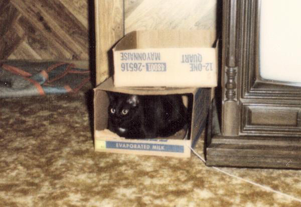 Henry in his boxes beside the TV (henry04)