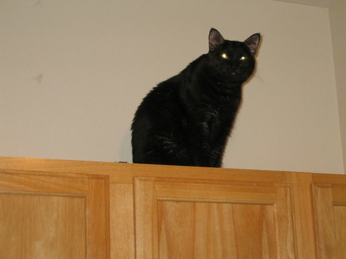 Kako sitting atop the kitchen cabinets (111_1200)
