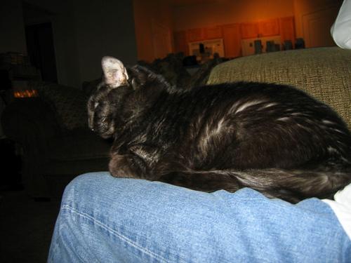 Kako lying on my legs (115_1510)