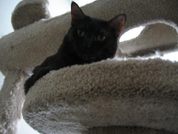 Kako on the cat castle (183_8374)