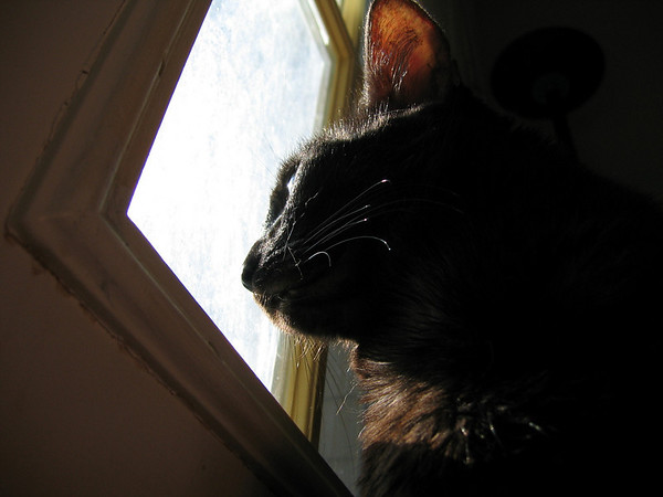 A close-up of Kako as she looks out the patio door (191_9114)
