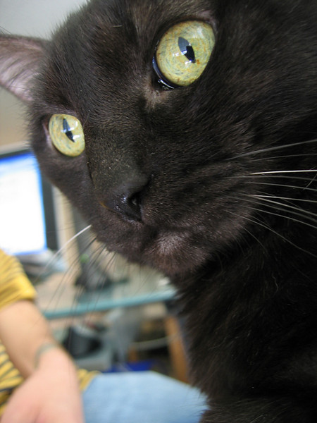 A close-up of Kako's face showing more white whiskers