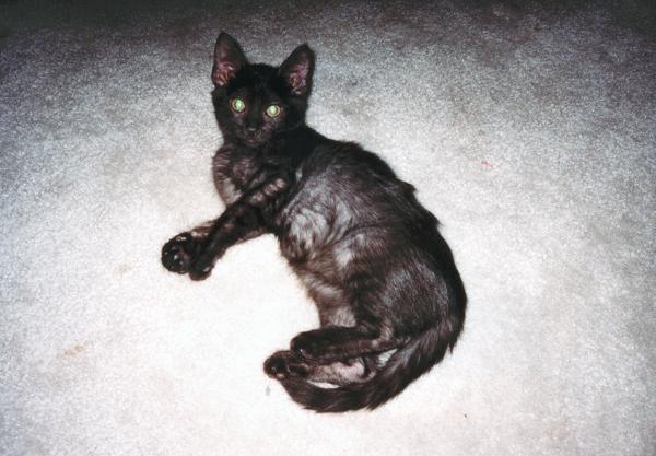 """<a href=""""http://xenogere.com/kako-the-kitten/"""" title=""""Kako the kitten"""">Blog entry</a>"""