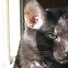 """<a href=""""http://photos.xenogere.com/photo/85/"""">Blog entry</a>"""