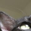 "<a href=""http://xenogere.com/2008/10/07/catwoman/"">Blog entry</a>"