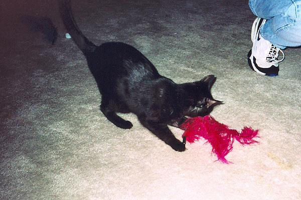 Kako attacking the feather (kako10)